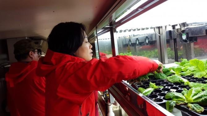 세종 온실에서 수확 중인 필자 - 전현정 제공